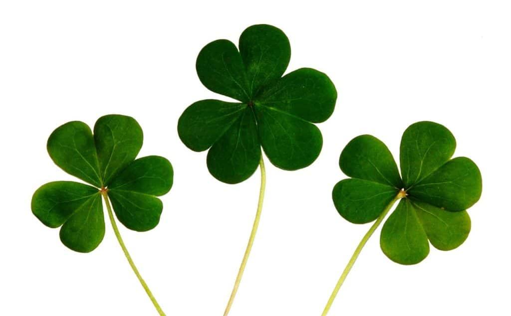 clover, a symbol of ireland