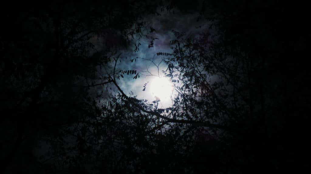 Full moon visible through trees