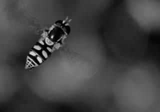 buzzwords in copywriting