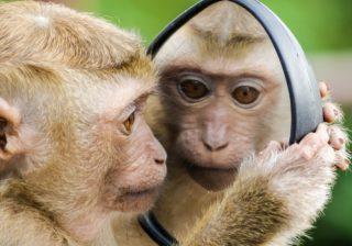 https://www.pexels.com/photo/closeup-photo-of-primate-1207875/