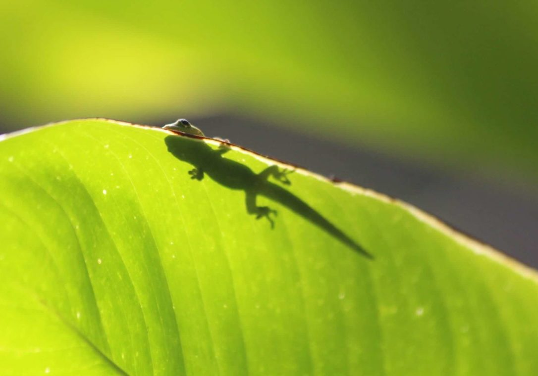 Learn GEICO's secret for repeat marketing success.
